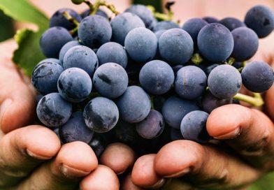 Се бараат берачи на грозје во соседството!