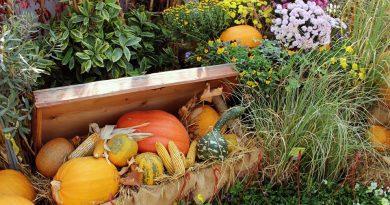 Градинарскиот центар ,,Фоја,, со креативна идеја за да се привлечат посетители