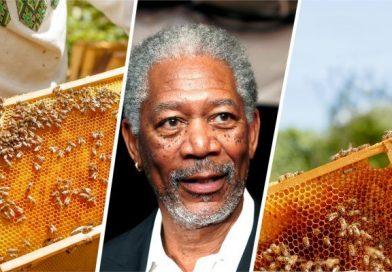 Морган Фриман со иницијатива за спасување на пчелите