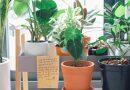5 трендови за собни растенија кои ќе бидат актуелни во 2020