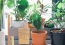 ФОЈА совети: Tрите најдобри билки прочистувачи за секој дом