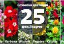 Сезонски цветници по акциска цена во ФОЈА