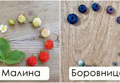 Од цвеќе до памук и кафе: Неверојатни фотки го покажуваат животниот циклус на растенијата