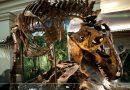 """Мистеријата е """"решена"""" – дали диносаурусите изумреле поради ерупција на вулкан или пак ги уништил огромен астероид?"""