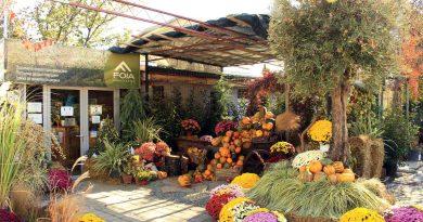 Градинарски центар ФОЈА- пример за креативна компанија која секогаш пријатно ги изненадува своите клиенти