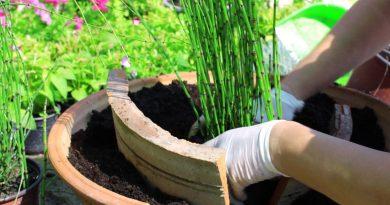 И во лето се сади! Еден цвет или грмушка, едно дрвце или цела една градина.