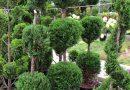 16 години ФОЈА-мојот омилен градинарски центар!